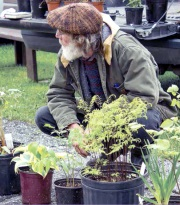 Elderly-man-with-plants